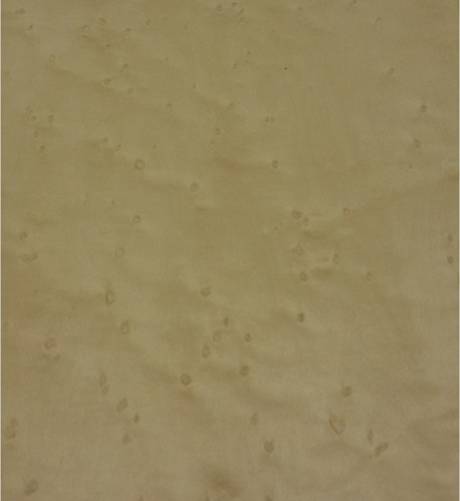 """Шпон Клен """"Птичий глаз"""" 3100х260х0,6 мм"""